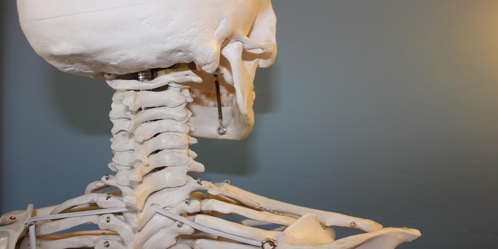 Atlaswirbelkorrektur – 1.Halswirbel als möglicher Verursacher vieler Beschwerden