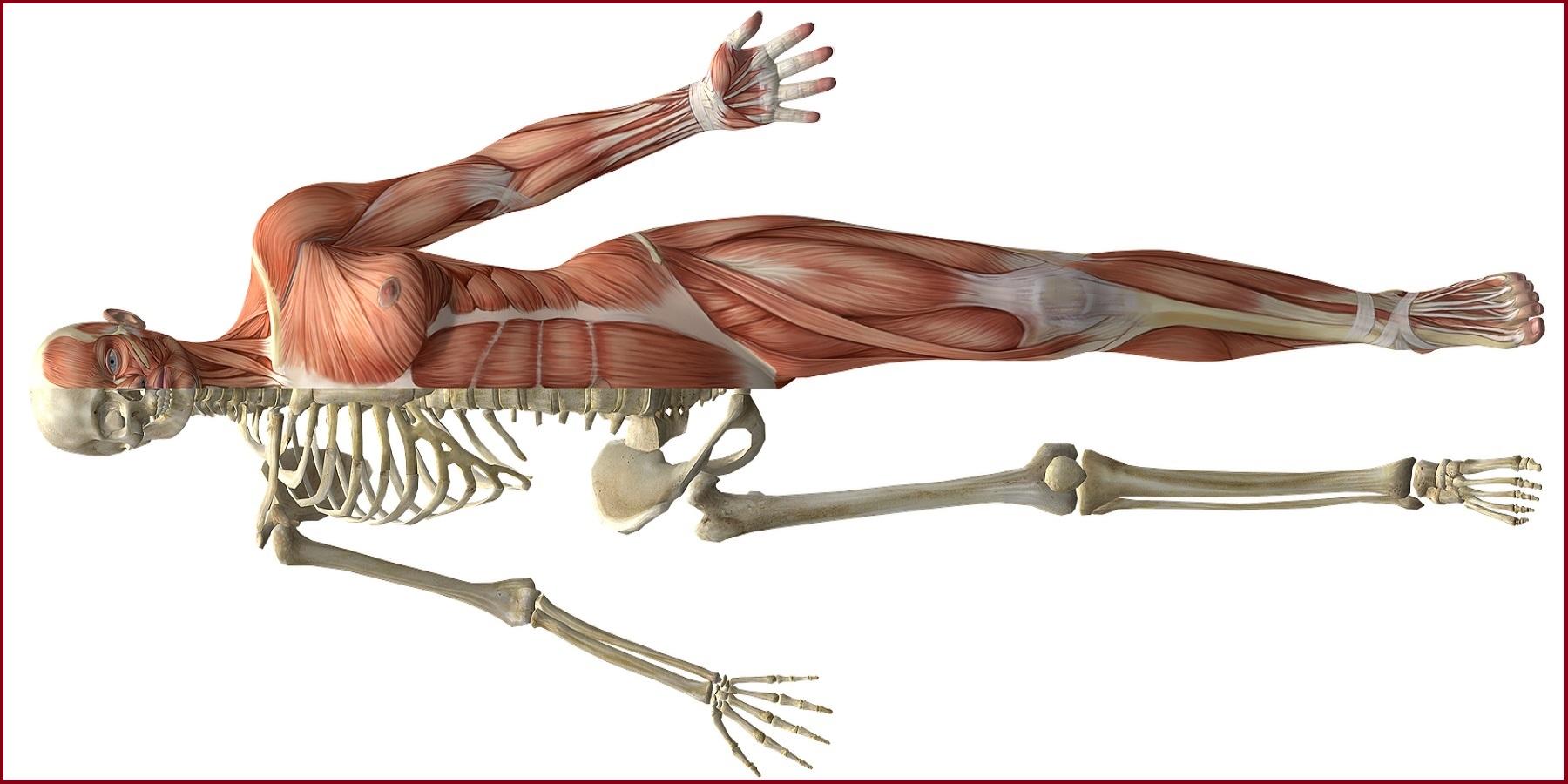 Cantienica Methode – Stärkung der inneren Stützmuskulatur & des Beckenbodens